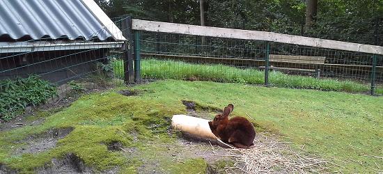 Tijdelijk geen konijnen