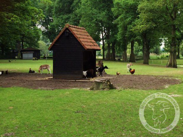Jubilerende Stichting Dierenweide Nieuwe Pekela bestaat 10 jaar