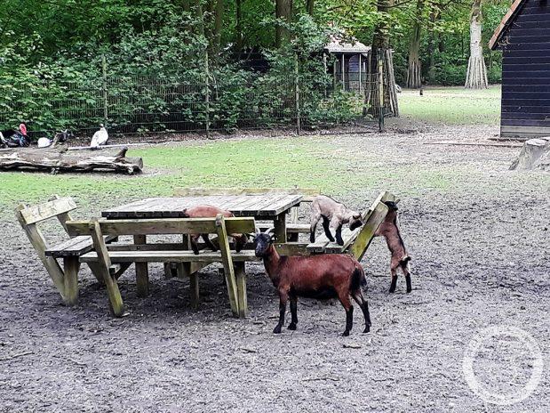 Dagboek van een geit: Picknicken?